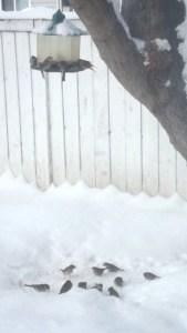 birds eating in my back yard Edomont-AB