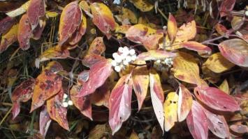 folhas no perto de casa