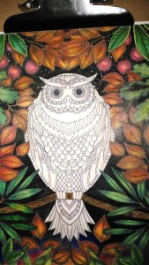 background ready- Owl Secret Garden